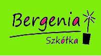 Bergenia Szkółka Bylin