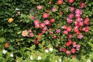 Rosarium w Parku Śląskim
