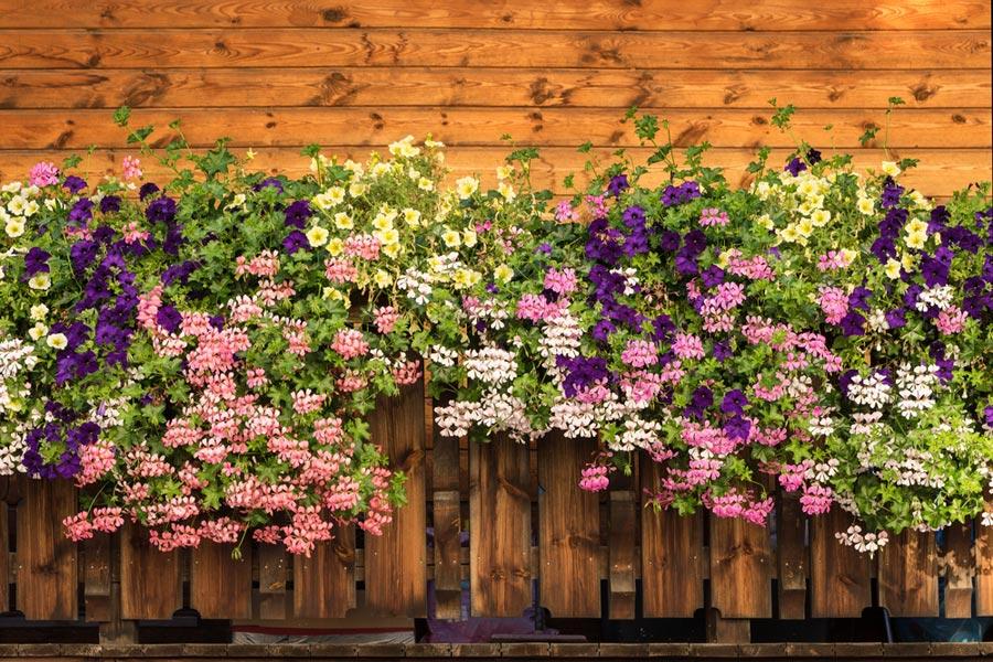 Twój Ogród Bezpieczny I Piękny